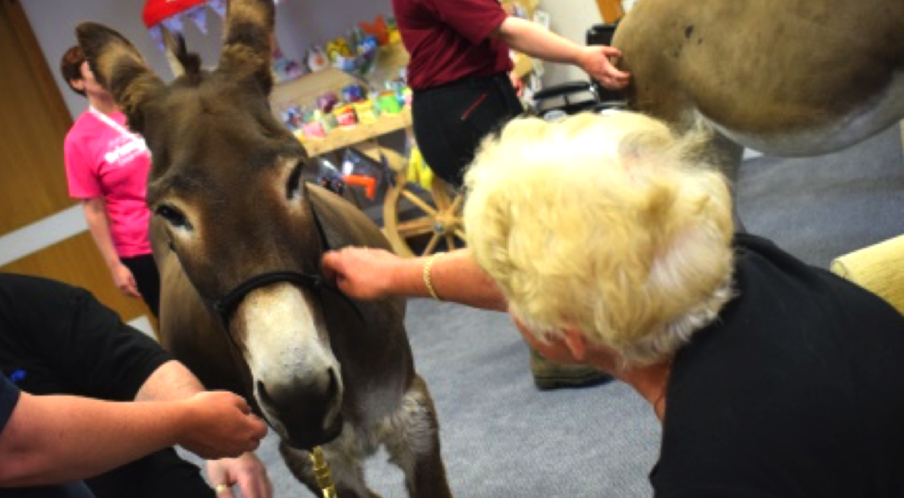 Trinity Hospice arranges special visitors for patients, such as the donkeys from the Donkey Sanctuary.
